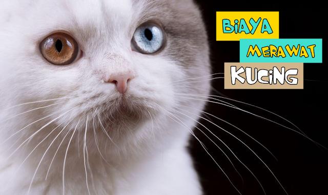 Perawatan Kucing Mahal