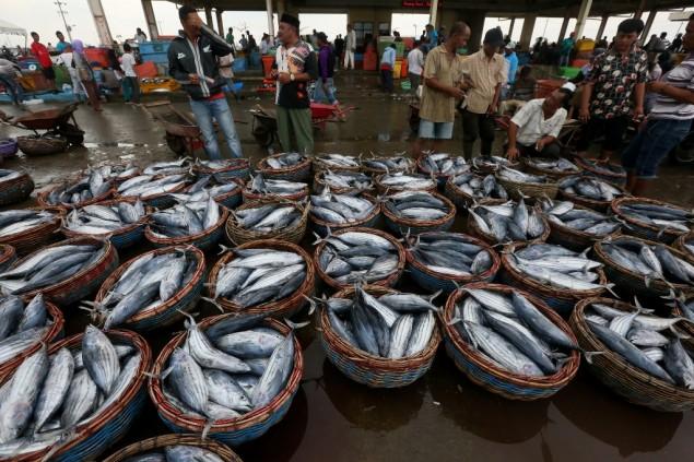 Natuna akan Menjadi Pasar Ikan Terbesar setelah Tokyo