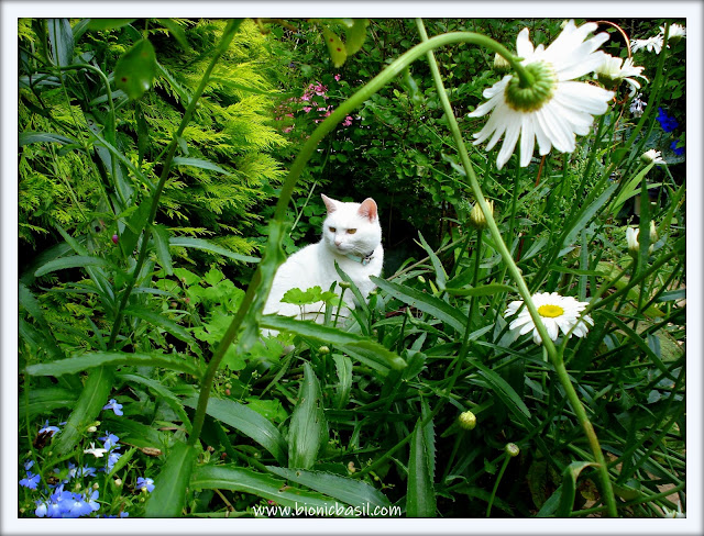 Angel Snowie Deep In The Jungle ©BionicBasil® The Sunday Selfies