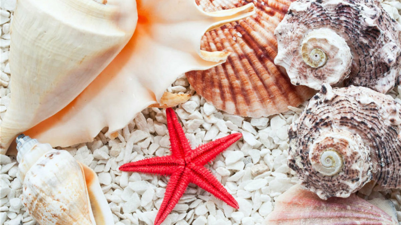 3d Cool Wallpapers Free Download Seashells Wallpaper Collection Most Beautiful Places In
