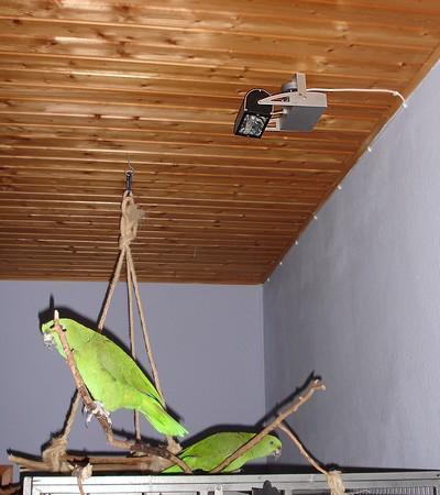 max papageiengeschichten dezember 2012. Black Bedroom Furniture Sets. Home Design Ideas