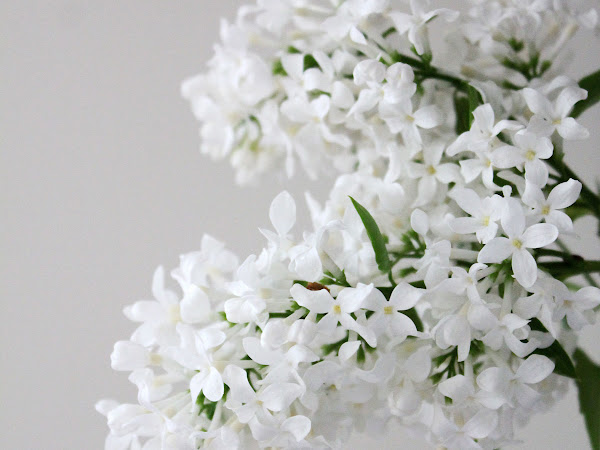 White Lilacs And Old Bottles