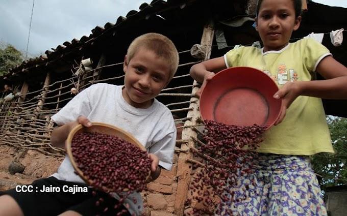 Producción agrícola de Nicaragua avanza satisfactoriamente
