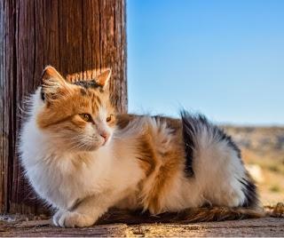 Stray cat sitting