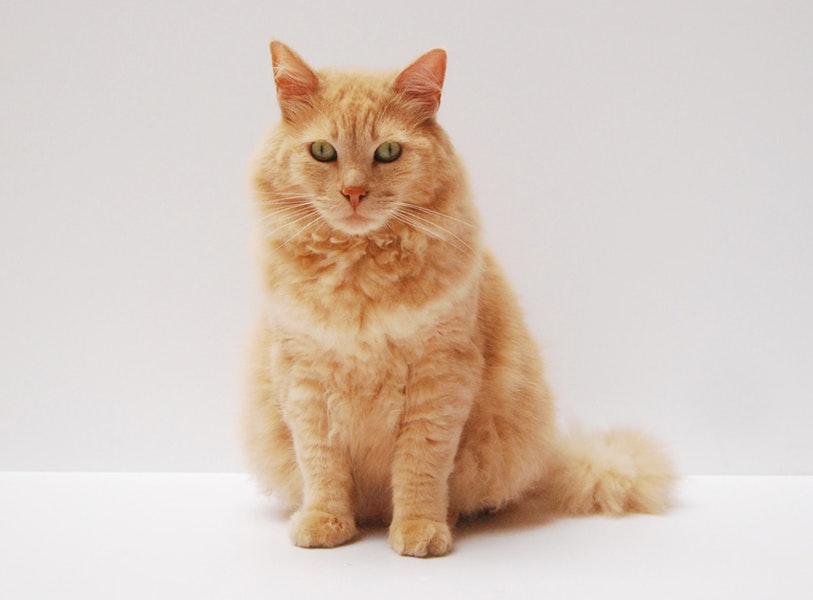kastracja kocura, kastracja kotki, sterylizacja