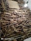 Beternak Jangkrik Hasilkan Jutaan Rupiah