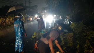 Kapolsek Senggigi Kompol Bowo Tri Handoko SE.SIK saat memimpin evakuasi pohon tumbang.