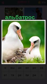 65 слов в траве сидит альбатрос и детеныш рядом 4 уровень