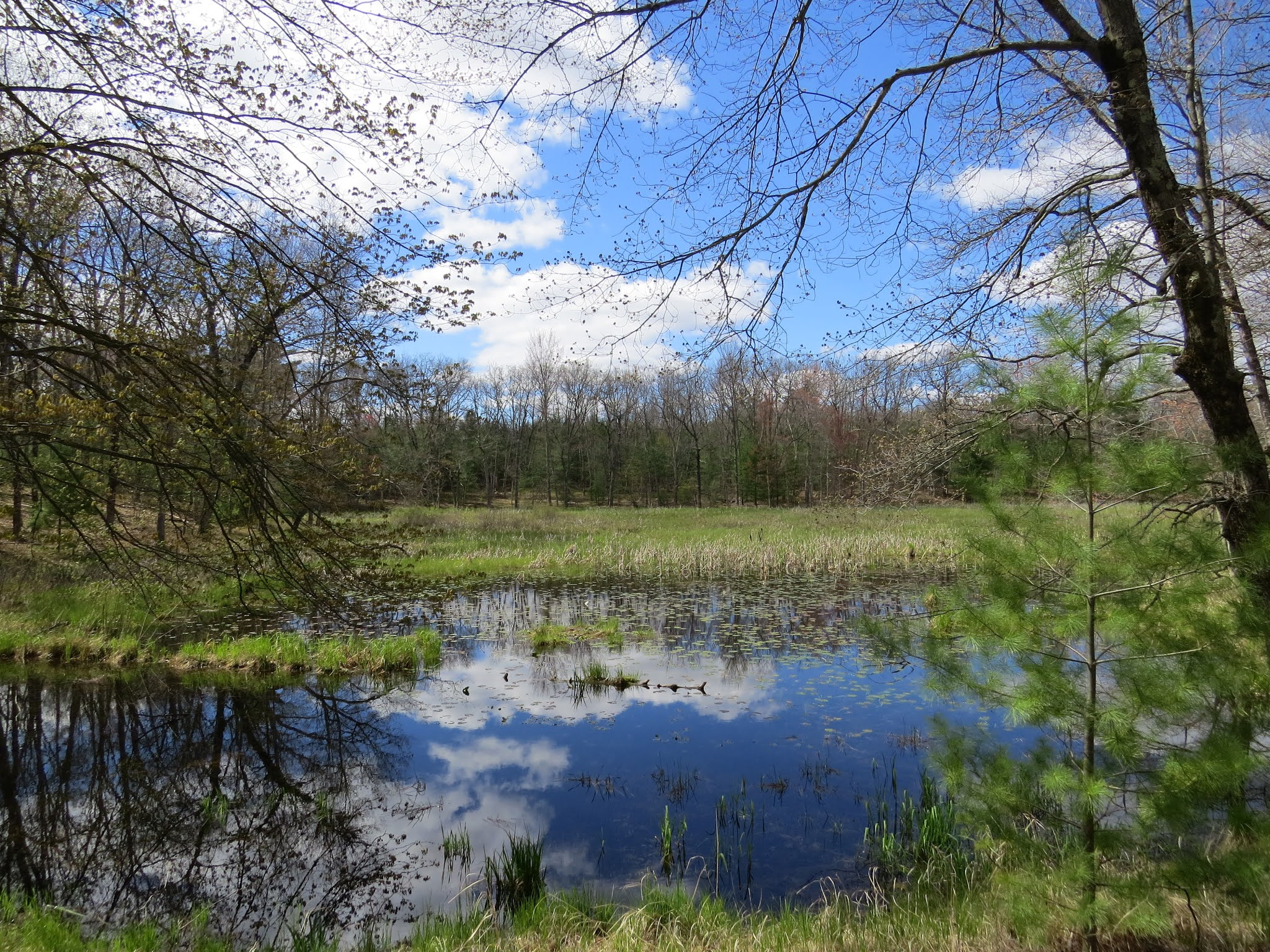 wetland with cloud reflections