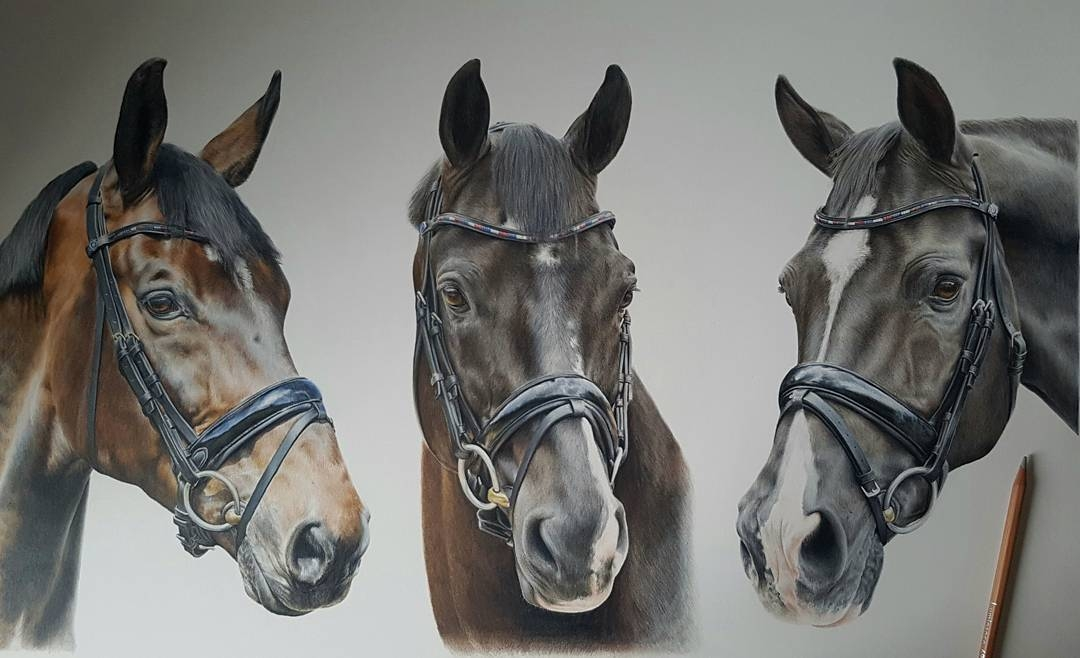 13-We-Noble-Three-Bethany-Vere-Colored-Pencils-Realistic-Animal-Drawings-www-designstack-co