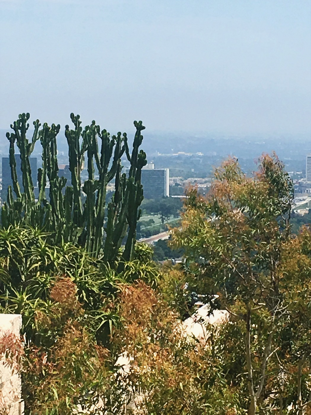 Brentwood Getty Museum LA View_Cacti_Cactus
