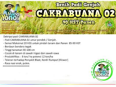Benih Padi CAKRABUANA 02 (CB02)
