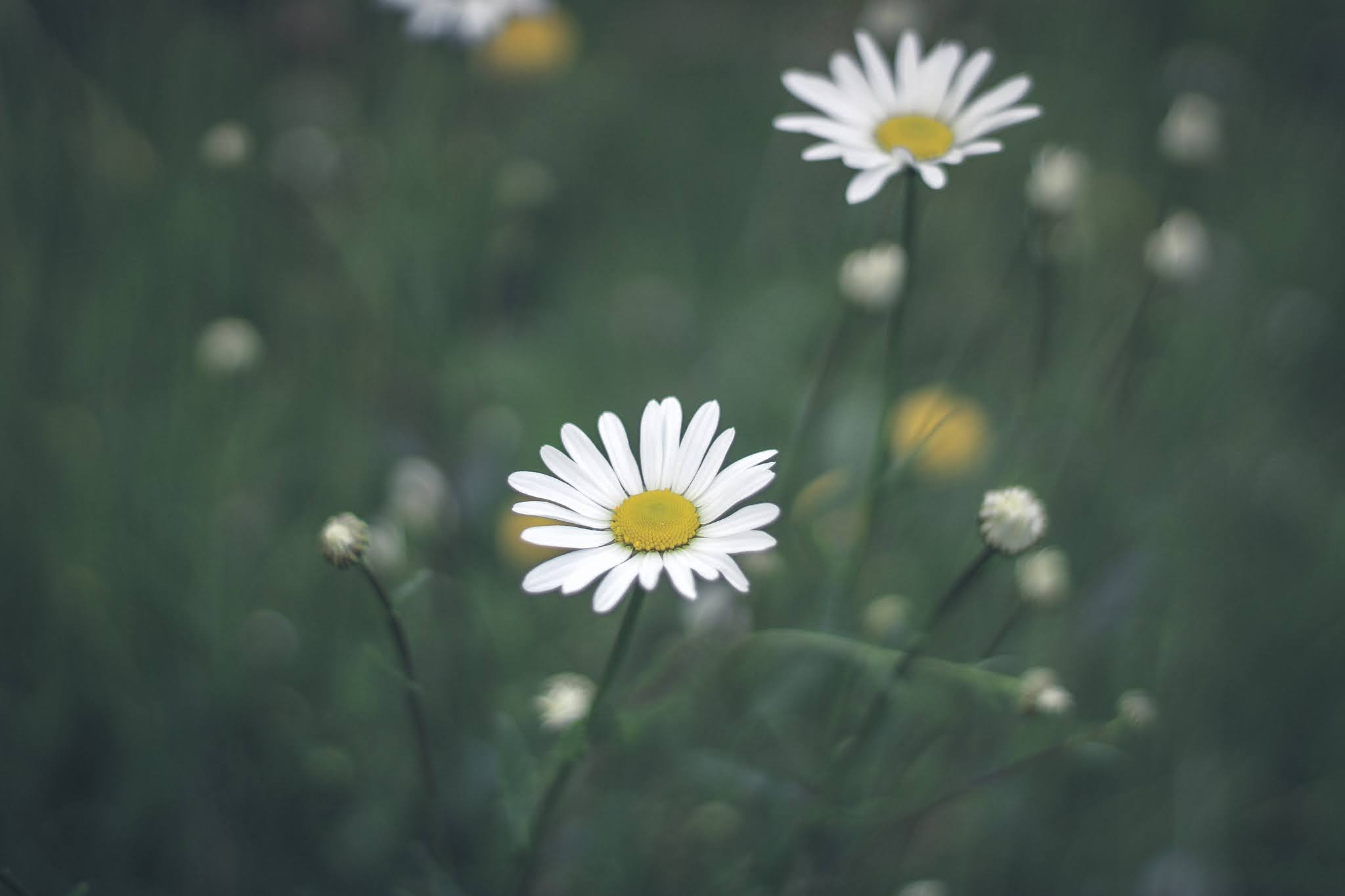 """""""I must have flowers, always, and always."""""""