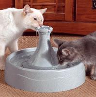Los gatos toman agua al menos 3 veces por día