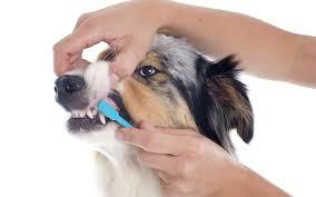 Consejos dentales esenciales para perros
