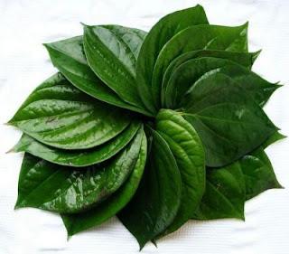 7 Bahan Herbal Untuk Mengobati Batuk dengan Tradisional
