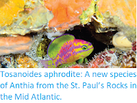 https://sciencythoughts.blogspot.com/2018/10/tosanoides-aphrodite-new-species-of.html