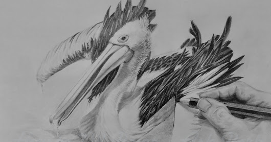 Drawing a Pelican