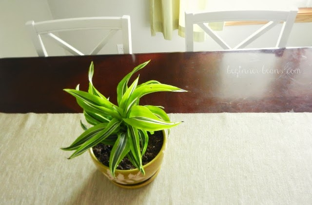 air-filtering houseplant as dining table centerpiece