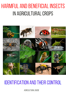 Insects, agricultural insects, harmful insects, beneficial insects