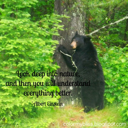 Colorful Quotes: A photo of a Bear and a Nature Quote from Albert Einstein