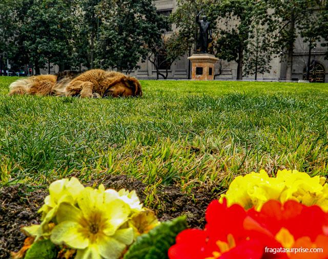 Cão de rua em frente ao Palácio de La Moneda, Santiago do Chile