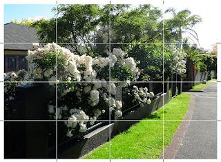 白い花の生け垣写真。左下から右上に向かって塀に白い花が咲いている。