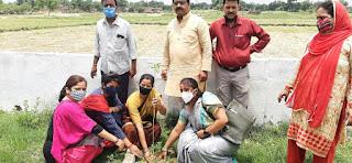वायुमंडल को शुद्ध एवं छाया के लिए लगाए 12 पौधे | #NayaSaberaNetwork