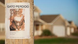 7 cosas que puedes hacer para encontrar a tu gato perdido o desaparecido