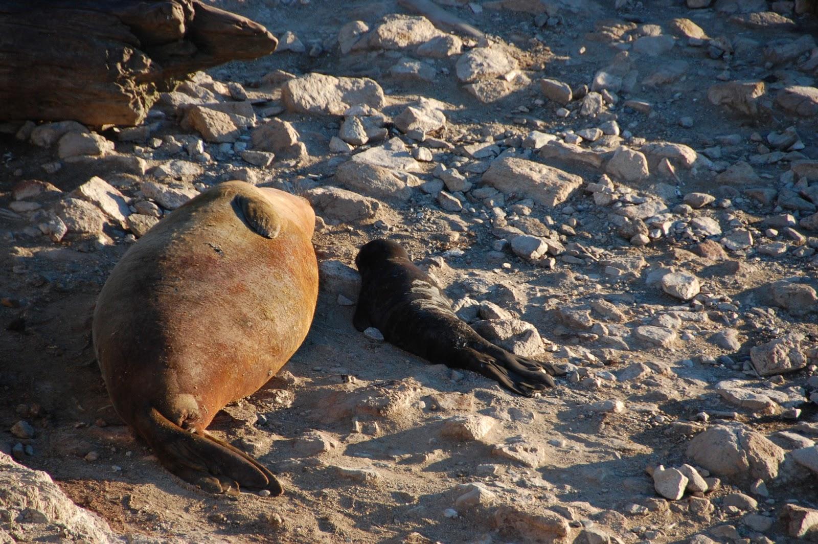 Sea Lion Vs Fur Seal