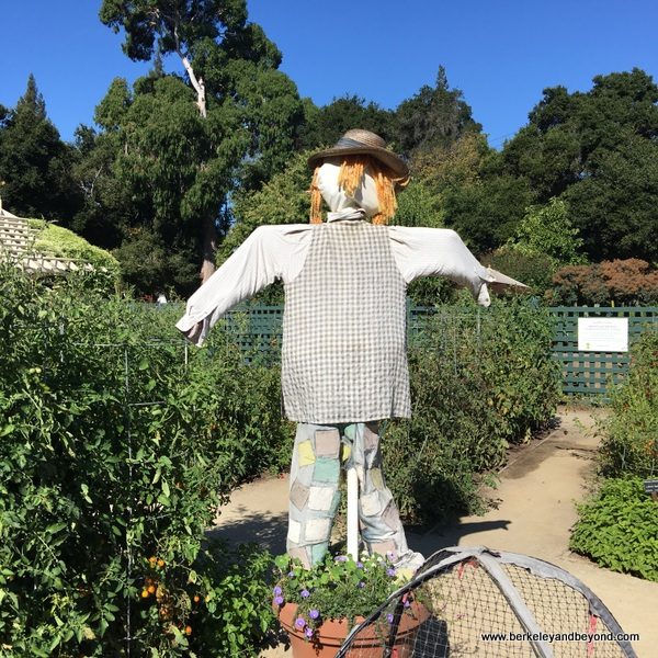 scarecrow at Elizabeth F. Gamble Garden in Palo Alto, California