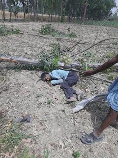 सीतापुर : कटान के दौरान यूकेलिप्टिस का पेड़ सर पर गिरने से युवक की मौत, ठेकेदार मय मजदूरों के फरार