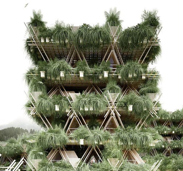 Casa-bambu-1