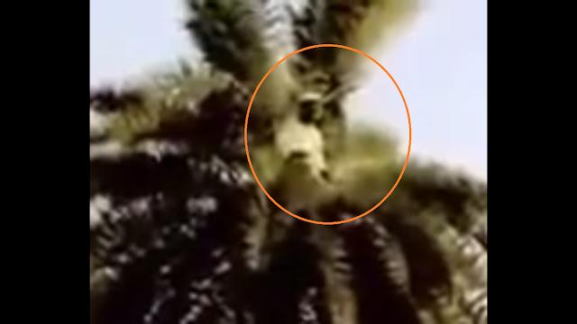 VIDEO : Subhanallah, Orang ini Shalat Diatas Pohon Kelapa