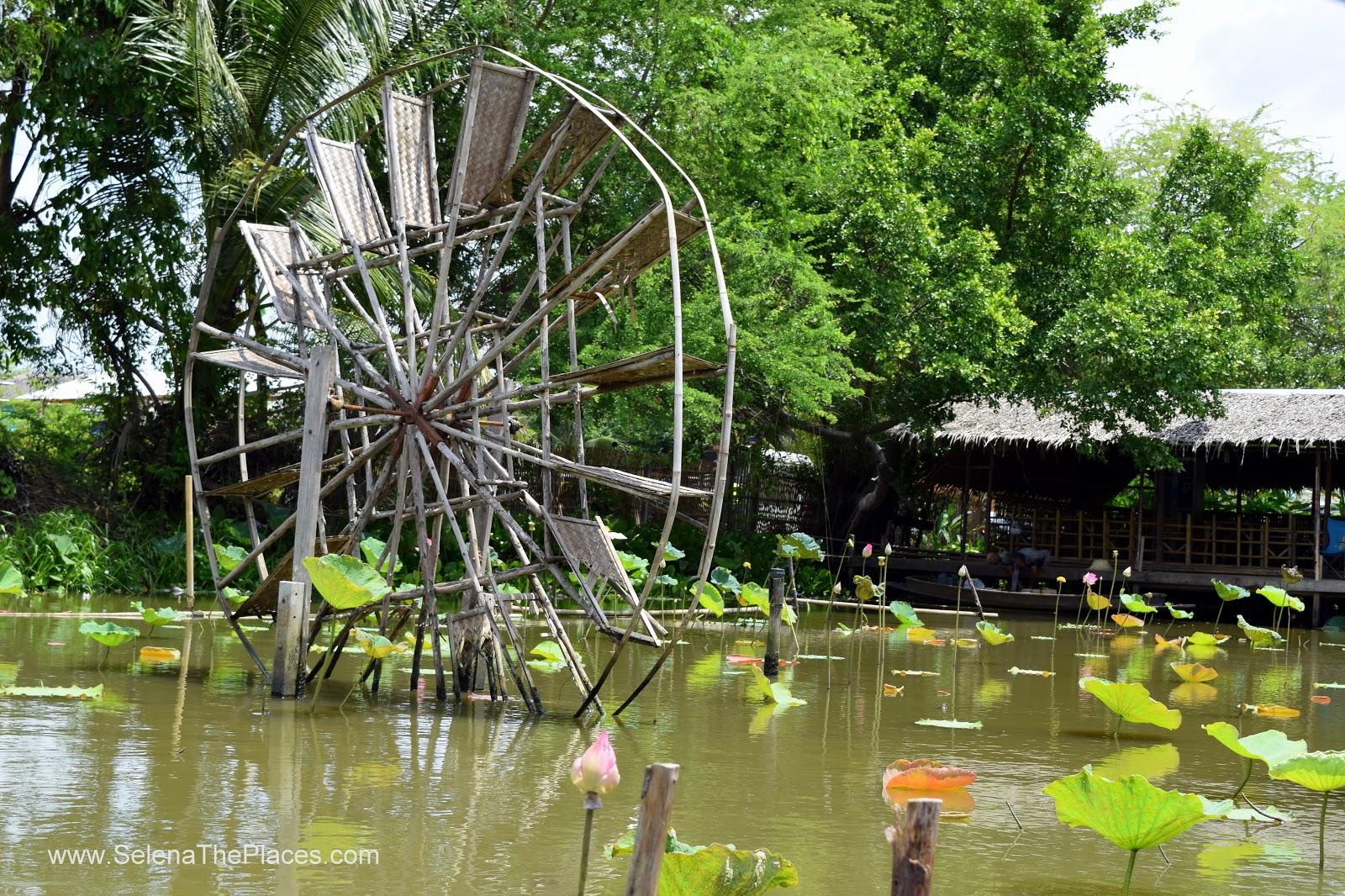 Bangkok Lotus Farm