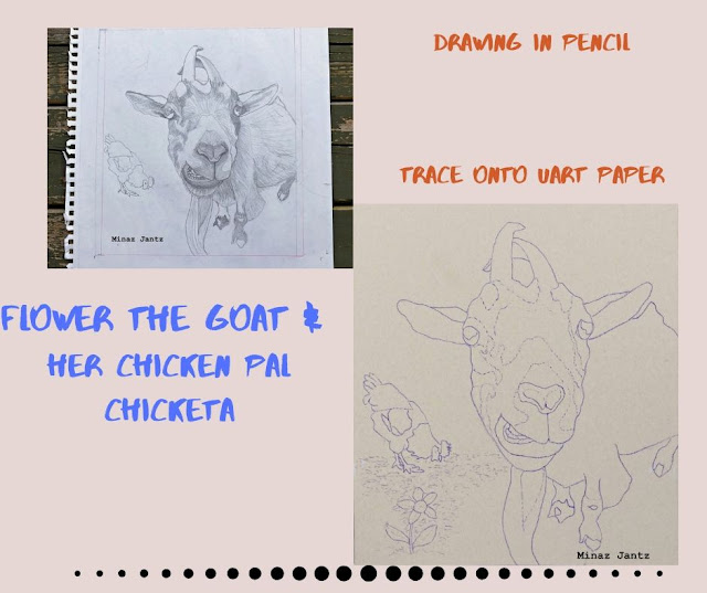Draw & trace goat portrait.