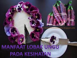 Khasiat lobak ungu yang sangat luarbiasa