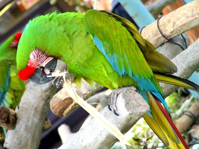 100 #鳥 #オウム #風景 #かわいい #緑