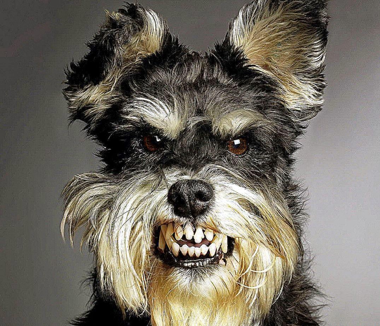 Dog Wallpaper Funny Image