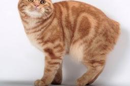 Jenis-jenis pasir kucing yang wajib diketahui bagi pecinta kucing