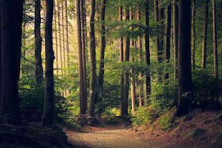 Essay on Forest in Hindi   जंगल/ वन पर निबंध - Greatexplain.com
