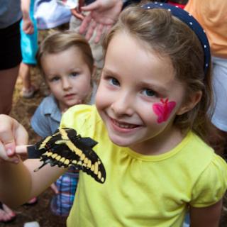 Keceriaan Hampyeong Butterfly Festival