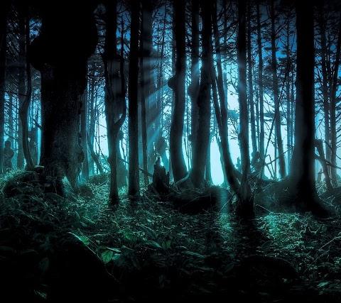 Rạng Đông Trên Rừng