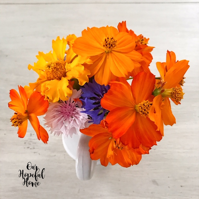 pink purple button flowers orange cosmos farmhouse bouquet