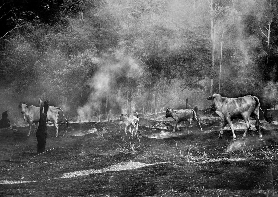 Animais sofrem com queimadas