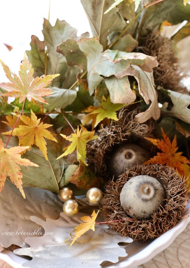 Thanksgiving Natural Centerpiece tips show how to use colorful Japanese leaves around a large acorn