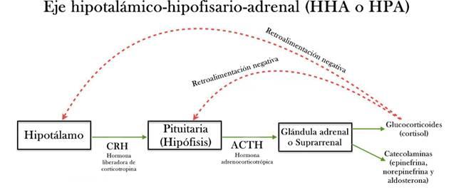 Disfunción del Eje hipotalámico-hipofisario-adrenal (HHA o HPA)