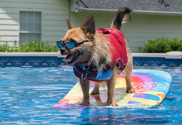 Jada the dog surfing in the pool