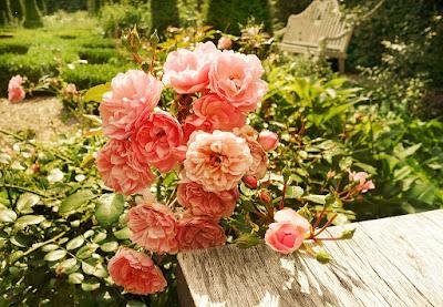 Los rosales son arbustos que agradecen una poda severa que les permita favorecer una floración copiosa