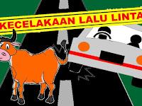 Gara-Gara Sapi Menyeberang Jalan, Mobil Mini Bus Terjun Kepersawahan di Kalabbirang